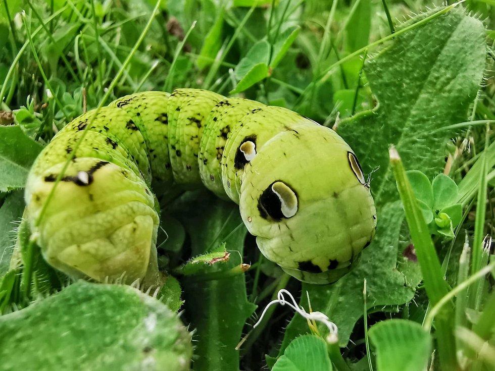 Ještěrky, housenky, mušky a další tvory lze v letních dnech pozorovat na zahradách.