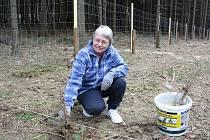 V Hodicích vyrazili brigádníci do lesa sázet stromky. Veřejně prospěšné práce pomáhají obcím například stihnout zasadit včas.