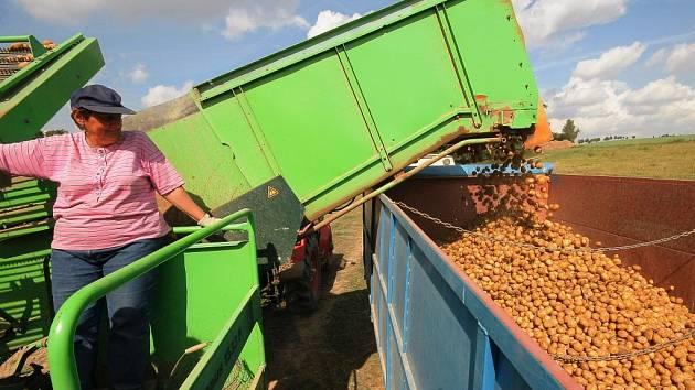 SKLIZEŇ JEŠTĚ NESKONČILA. V posledních dnech bylo na Vysočině deštivo, což sklizni brambor nepřálo. Zemědělci se však napolích určitě objeví v tomto týdnu. Má být sucho a tepleji.