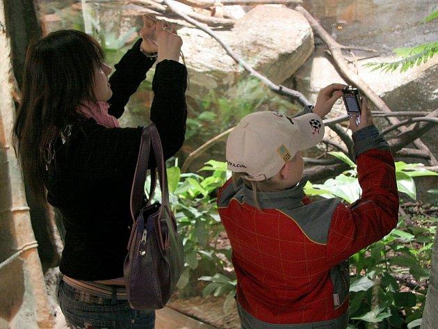 Jihlavská ZOO láká především děti a mládež. Ti si často pořizují fotografie zvířat třeba i mobilním telefonem.
