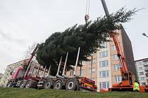 Kácení a převoz vánočního stromu na Masarykovo náměstí v Jihlavě.