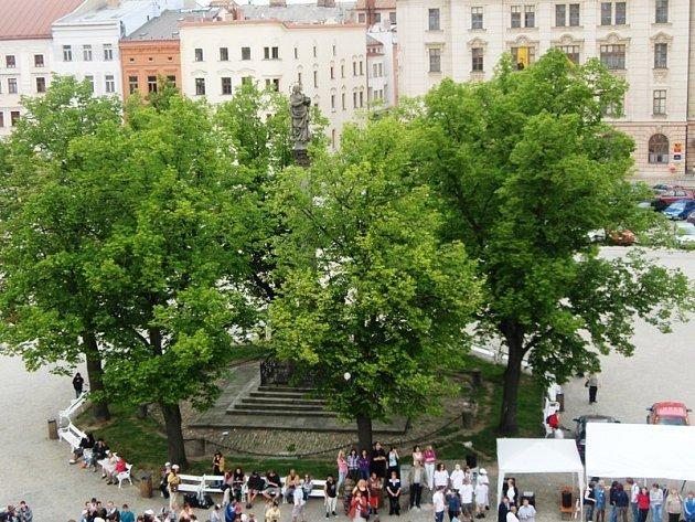 Lípy u morového sloupu na jihlavském Masarykově náměstí