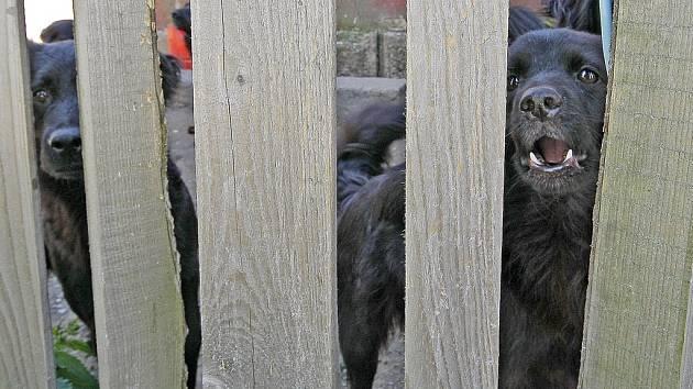 Již dříve se řešily i další podobné problémy, jako třeba v Horní Vilímči na Pelhřimovsku. Tam se obyvatelka drážního domku nedokázala postarat o smečku psů. Na snímku z června roku 2009 jsou zachyceni někteří ze psů za plotem.