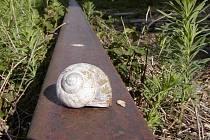 Za 17 let, co se diskutuje o propojení trati z Kostelce do Rakouska, by se k jižním sousedům doplazil snad i hlemýžď.