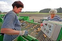 Šéfové bramborářských družstev mají jasno, že jejich kombajny musí hlízy sklidit ve špičkové kvalitě bez poškození, protože jinak obchodníci ztrácí zájem.