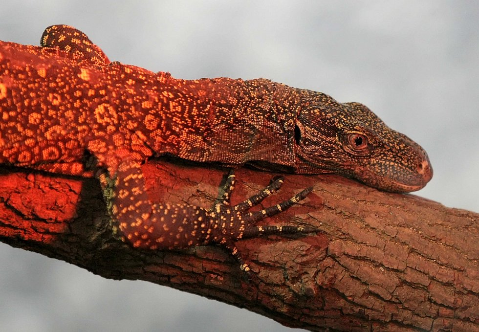 Tropický pavilon je domovem pro krokodýly, ještěry i hady.