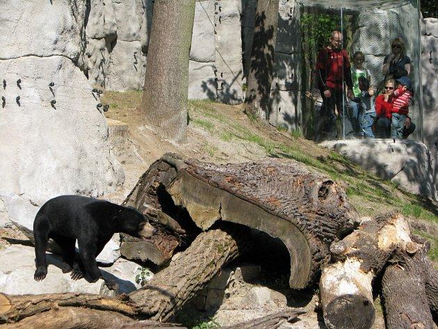 Malay Medan. To je jméno nového medvědince, který v sobotu otevřela jihlavská zoologická zahrada. Slavnostní otevření si nenechalo ujít několik stovek lidí.