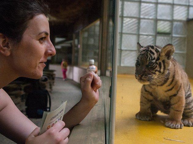 Jihlavská zoo. Ilustrační foto.