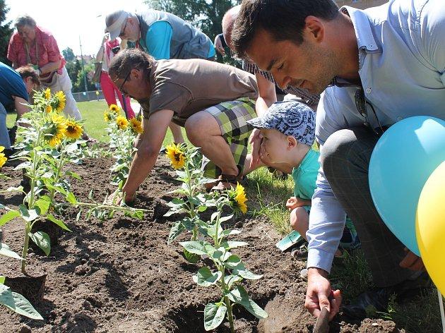 V úterý 6. června vznikl na Hradební ulici nový záhon slunečnic. Na podporu lidí s roztroušenou sklerózou. Slunečnici na podporu zasadila také redaktorka Jihlavského deníku.