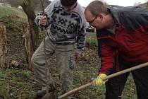 Ochránci z Kněžic při výsadbě třešní v lokalitě Boskovštejn.