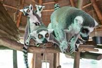 Jihlavská Zoo, ilustrační foto