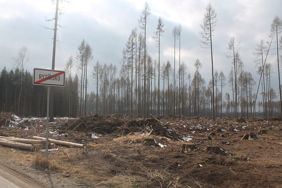 Rytířsko patří také pod Jamné, les tam ale zničil kůrovec.