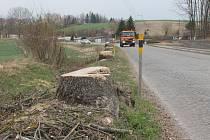 Devět stromů šlo k zemi. Za padlé stromy budou v průběhu příštího roku vysázeny nové.