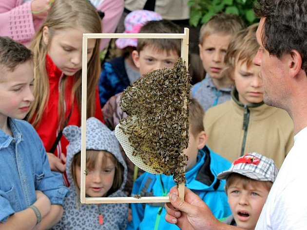 V jihlavské zoologické zahradě zpřístupnili údolí včel.