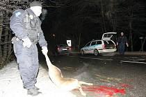 Na silnicích Vysočiny umírá po střetu s auty velké množství lesní zvěře, hlavně srnčí. Přitom by stačilo, kdyby kolem komunikací byly pachové odpuzovače. Na ty ale nejsou peníze.