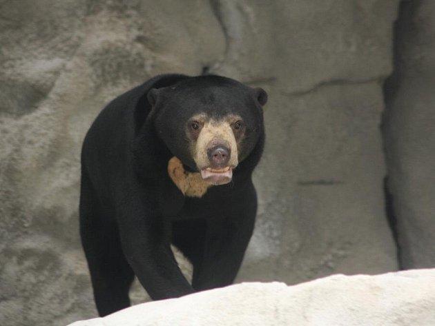 Zoo v Jihlavě plánuje velké investice