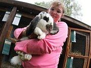 Přehlídka králíků, holubů a drůbeže v Třešti.