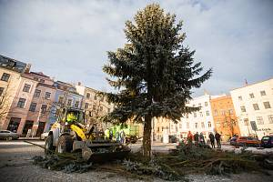 Kácení vánočního stromu na Masarykově náměstí v Jihlavě.
