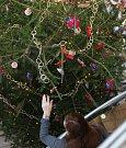 Předvánoční akce Barevné Vánoce v jihlavském sídle Kraje Vysočina.