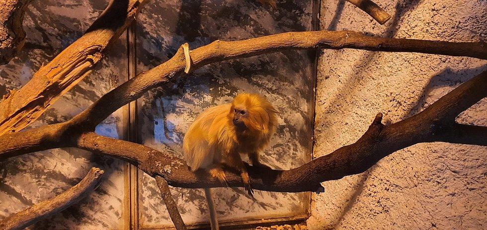 První dny byly v jihlavské zoologické zahradě poklidné. Návštěvníci neměli problém se ke zvířatům dostat, ta si to náležitě užívala.