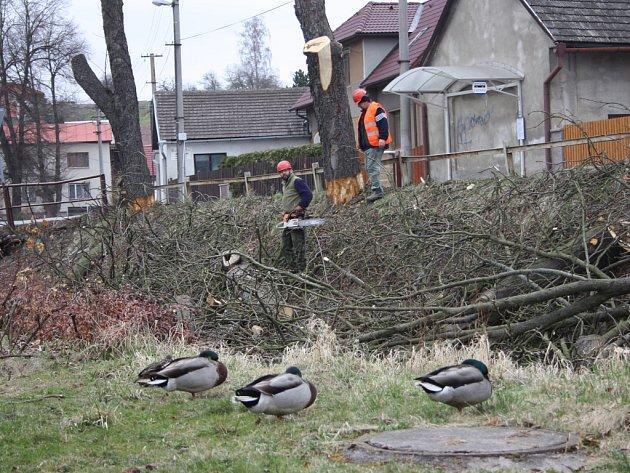 Desítky starých stromů musely v těchto dnech v Lukách nad Jihlavou ustoupit rekonstrukci silnice, která je v městysu naplánovaná na léto. Na snímku je lokalita u místního kina.