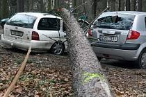 Tři zdevastovaná auta. To je výsledek práce skupinky dělníků, kteří včera v ulici Na Kopci v Jihlavě káceli stromy.