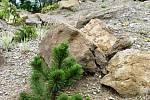 Součástí botanické zahrady je i skalka.