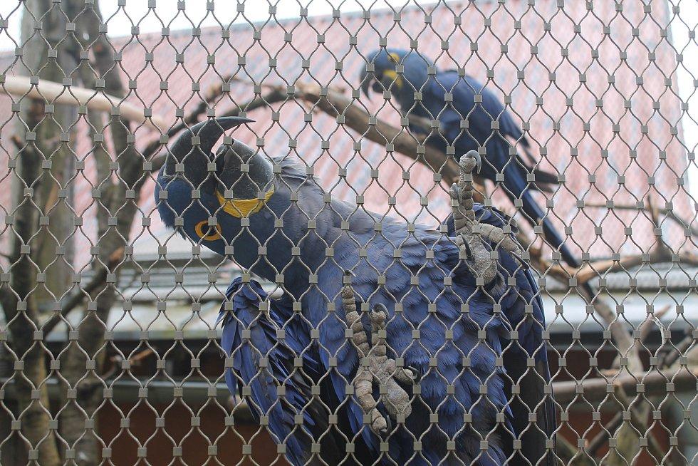 Po 115 dnech opět otevřela jihlavská zoologická zahrada. Nejčastěji přišly maminky s dětmi, které neodradilo ani chladné počasí.