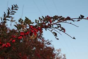 Podzimní čarování.