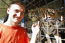 Ze čtveřice tygrů jde strach. Do klece se k nim odváží jenom jejich drezér Jan Aleš. Ostatní si od nich drží uctivou vzdálenost.