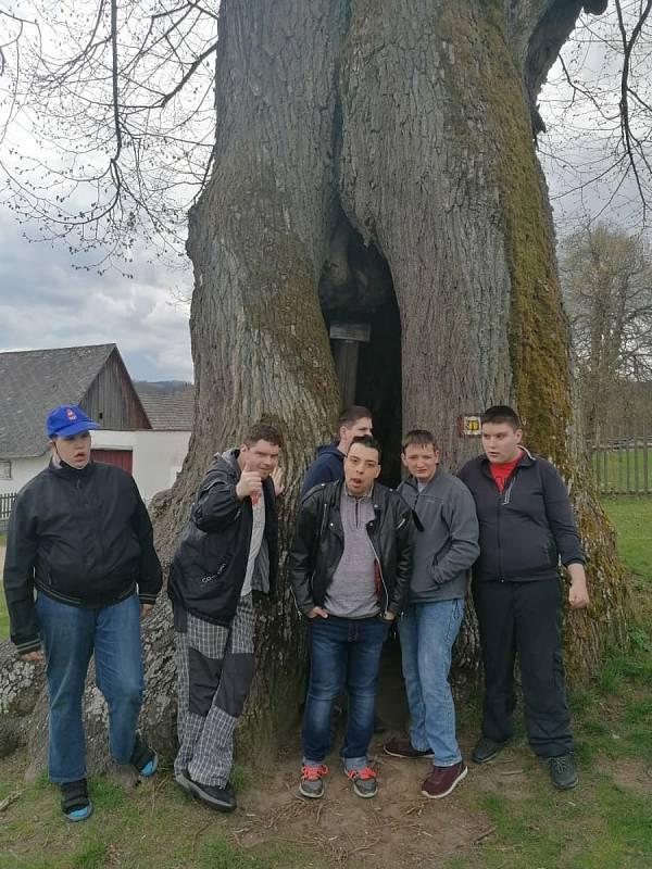 Klienti Domova Jeřabina začátkem května navštívili památnou lípu v Praskolesích.