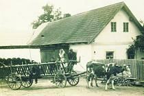 Ať se ve Věžnici stavěla škola, most, silnice nebo cokoli jiného, většina sousedů z Dolní Věžnice pronajímala stavitelům povozy.