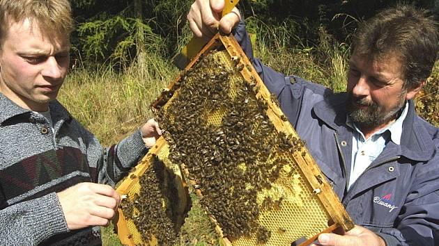 Tuzemští včelaři, kterých funguje kolem padesáti tisíc, mohou být na svoji práci pyšní. Med z celého Česka je jedním z nejkvalitnějších v celé Evropě.  Neodpovídá tomu ale výkupní cena, takže řady současných včelařů se jen těžko rozšiřují.