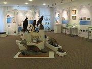 Výstava Přírodovědcem v muzeu.