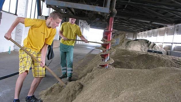 Brigádníci házejí semínka do vrstvy, kterou stále obrací šroubový mechanismus. Podlahou fouká vzduch.