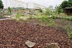 Pohled na nové arboretum v Třešti