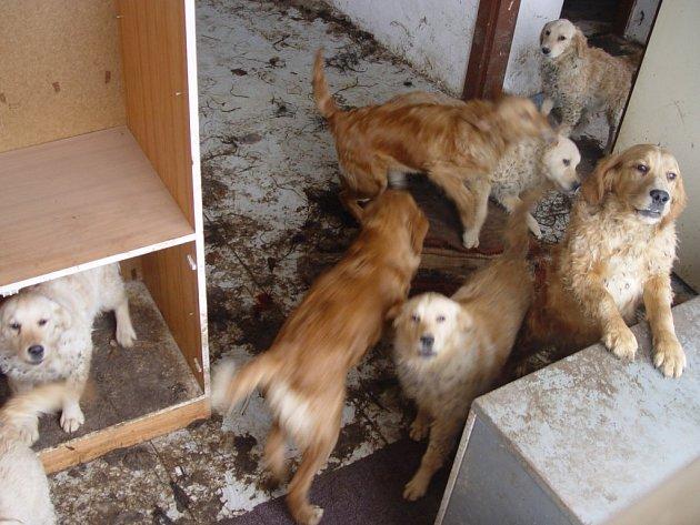 Myslivec z Pelhřimovska chová lovecké psy ve vepříně v Salavicích i v Těšenově na Pelhřimovsku. Dohromady má asi 40 psů. Osm z nich má pro sebe celý dům.