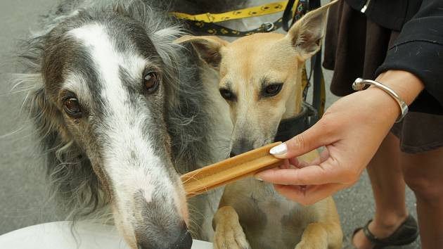 Do lesoparku Heulos ve čtvrtek dorazí Pojízdná veterinární poradna Pedigree, která poradí, jak psům čistit zuby.
