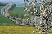 Vysočina rozkvetla do nevídané krásy...