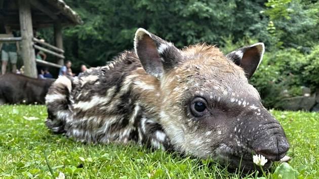 V jihlavské zoologické zahradě se to jen hemží mláďaty, která se v průběhu jara a začátkem léta narodila či vylíhla.