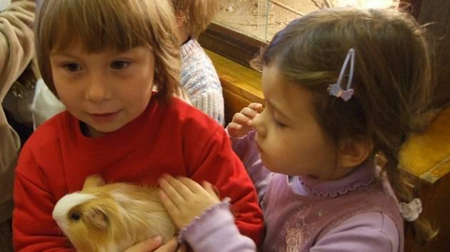 Po celý tento týden probíhají v Domě dětí a mládeže v Jihlavě Přírodovědná klubíčka pro mateřské školy. Děti se seznámí s živými zvířaty místního přírodovědného kroužku, mezi nimiž jsou třeba hadi a morčata.