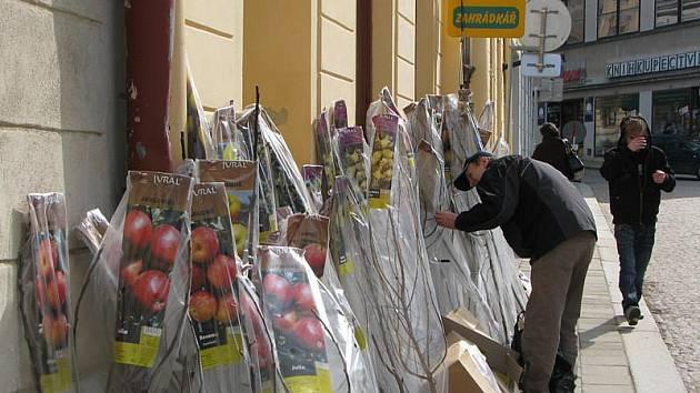 Zahrádkáři už v těchto dnech vybírají ty nejlepší ovocné stromy. Před obchůdkem v Komenského ulici v Jihlavě pomalu ubývají.