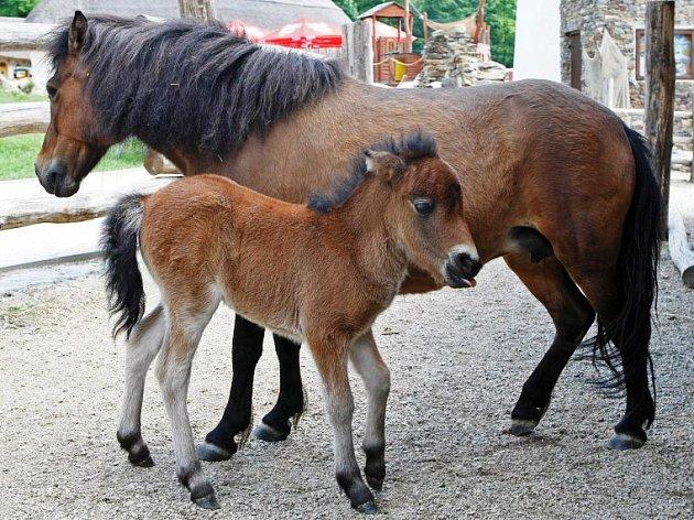 Snímky z jihlavské zoologické zahrady