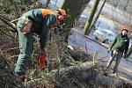 V jihlavském lesoparku budou hučet pily.