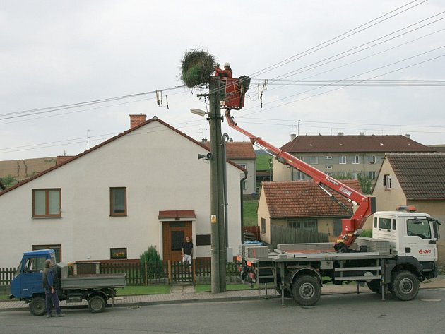 Včera pracovníci E.ONu odstranili čapí hnízdo na sloupu v Hodicích.
