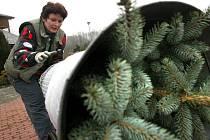 Prodejci stromků mají nyní napilno. S blížícími se Vánocemi se počty prodaných kusů borovic, smrků a jedlí zvyšují.