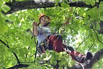 Stromolezci pracovali na Minoritském náměstí v historickém centru Jihlavy a v parku Malý Heulos.