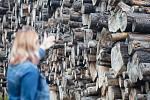 Sklad kůrovcového dřeva u Valdíkova na Třebíčsku.