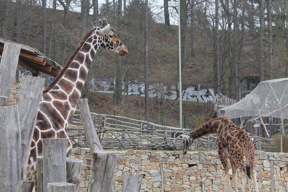 Jihlavská zoologická zahrada.
