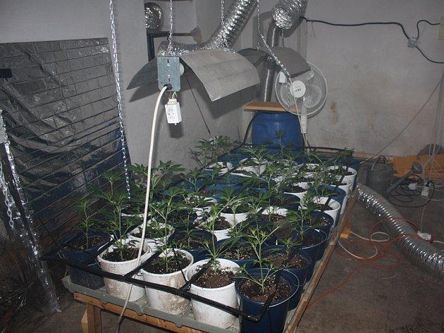 Mezinárodně působící gang v bytech pěstoval stovky rostlin konopí. Ilustrační foto.
